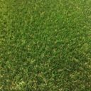 fylde grass aruba artificial grass secondary